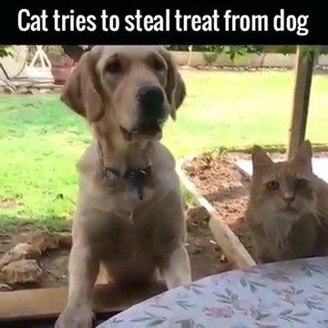 正面みる犬と猫