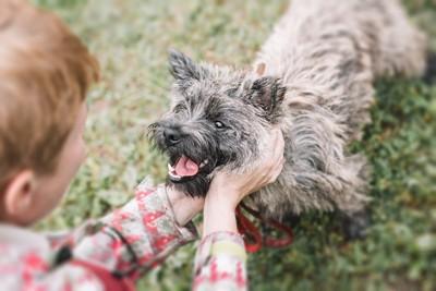 子供に撫でられて笑顔の犬