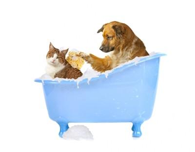 ダニ・ノミ対策をする犬と猫