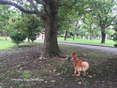 大きな木と犬
