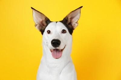 笑顔で嬉しそうな犬