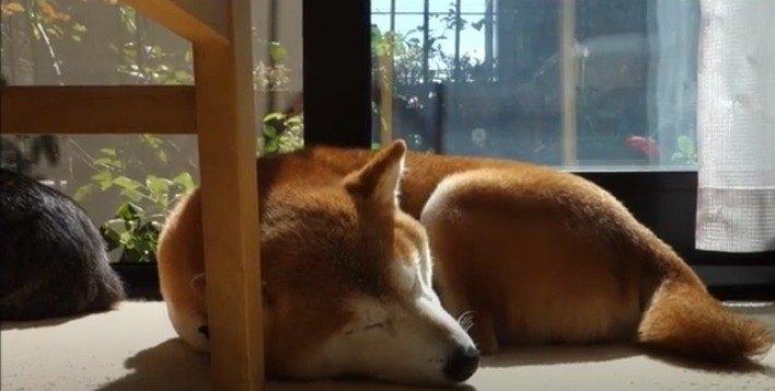 眠るひかりちゃん