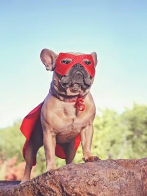 スーパーマンの衣装を着て石の上に立つフレンチブル