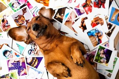 仰向けになって寝ている犬とたくさんの写真