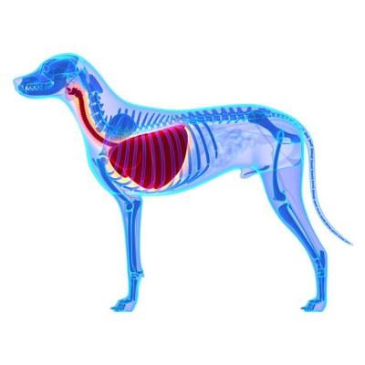 犬の肺のレントゲン