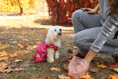 フンの後始末をする女性と服を着た白い犬