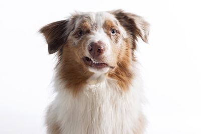 片方の口元を歪ませている犬