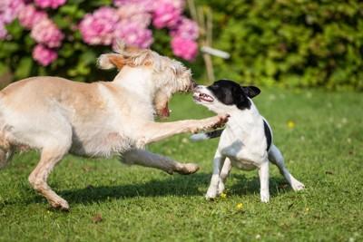 喧嘩している犬2匹