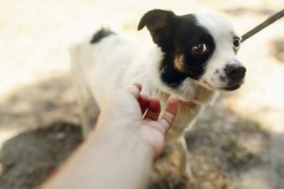 伸びてきた人の手に警戒している犬