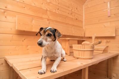 木のテーブルの上に乗る犬と桶