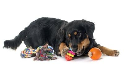 様々なおもちゃで遊ぶ犬