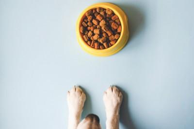 犬の食器と前足