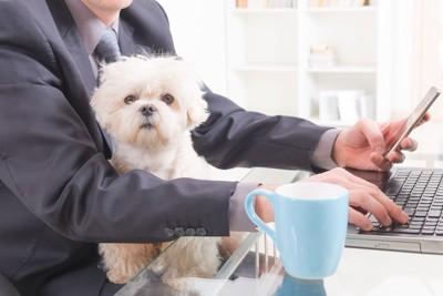 仕事中の人の膝の上に座っている白い犬