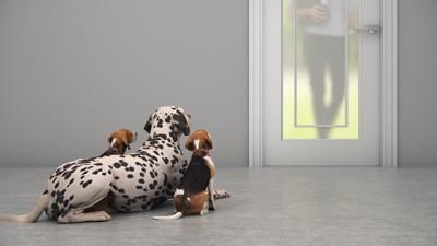 ドアの前で飼い主の帰りを待つ三頭の犬