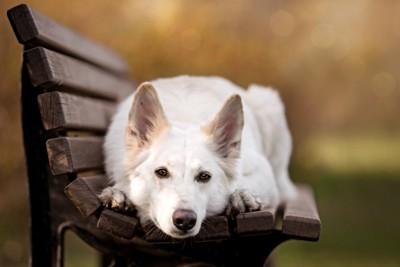 ベンチで眠る犬