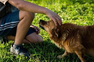 男の子に頭を撫でられる犬