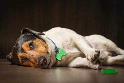 退屈そうに床に寝転がる犬