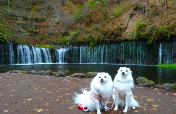滝をバックに犬