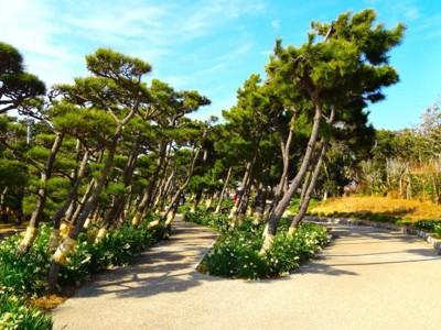 傾く松の木