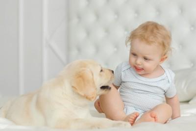 ベッドの上にいる犬と赤ちゃん
