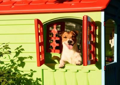 犬小屋から顔を出す犬
