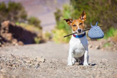脱走を決意した犬