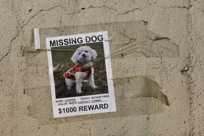 迷い犬のポスター