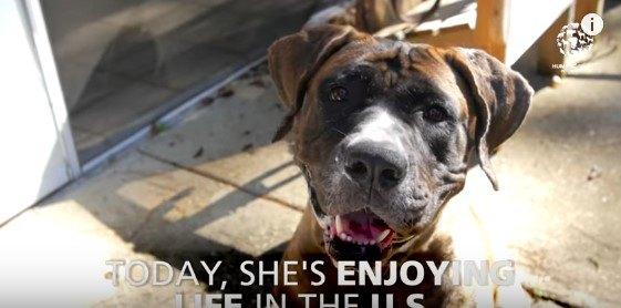 救出され健康を取り戻した犬