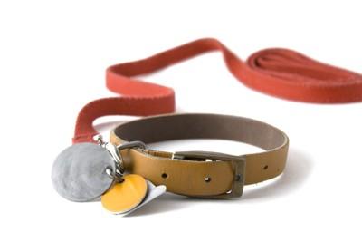 迷子札の付いた首輪