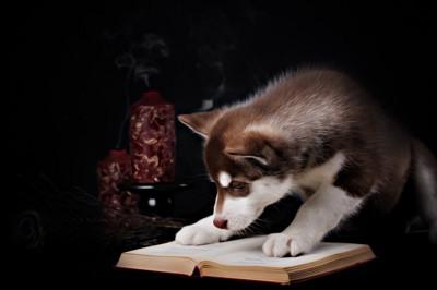 ハスキー子犬本を読む
