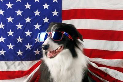 国旗に囲まれた犬