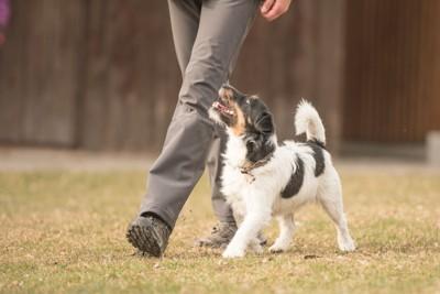 飼い主に寄り添って散歩する犬