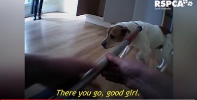 首に保護器をつけられた犬