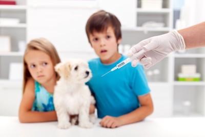 注射器を見つめる子供と犬