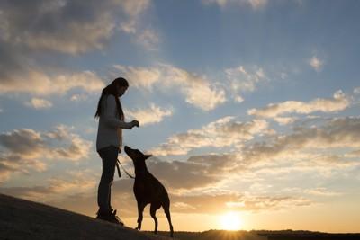 夕日の中で向かい合う犬と女性