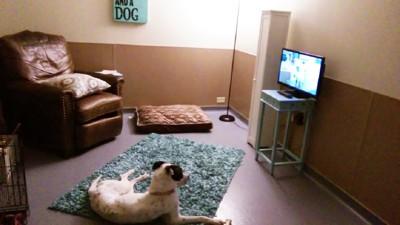 部屋でくつろぐ白と茶色の犬