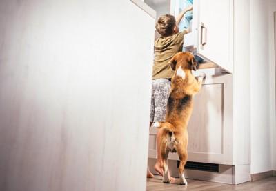 男の子と一緒に棚を覗く犬の後ろ姿