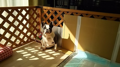 トイレ横で黄昏ている犬