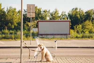 お店のポールにつながれている犬