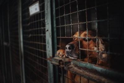保健所に収容されている犬たち