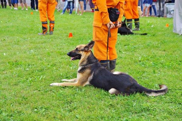 訓練されている犬