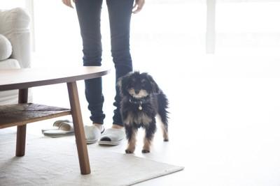 長毛の犬と背後に女性の足元