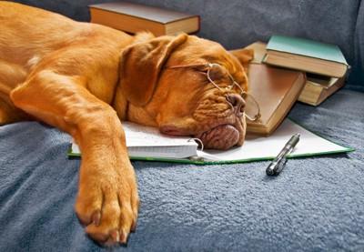 勉強に疲れて眠る犬