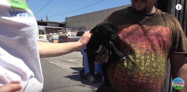 腕に抱えられた2匹目の犬