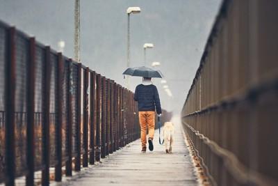 雨の中散歩する犬と男性