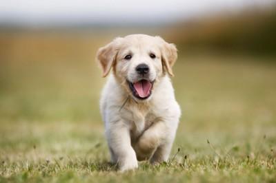 外で遊ぶ子犬