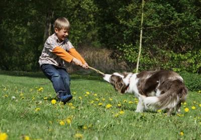 木の枝を引っ張り合う犬と男の子