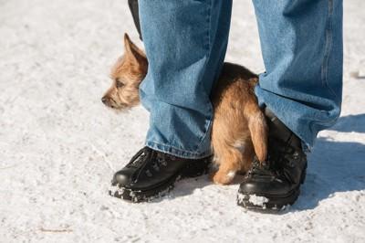 足の間に隠れる子犬