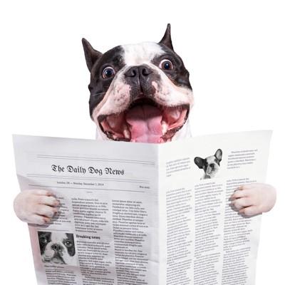 新聞を読むフレンチブル