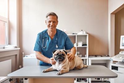 獣医師と診察台のパグ